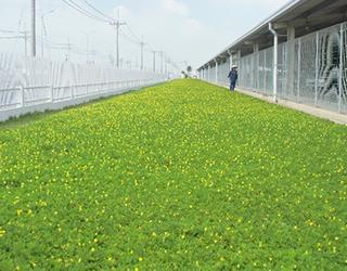 緑地造成・維持管理イメージ1